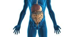 appareil-digestif4